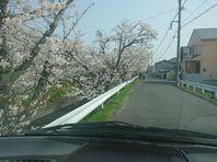 転院・通院時の車窓からのお花見