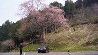 一本桜ドライブ その2