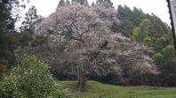 一本桜ドライブ その3