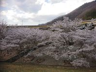3月25日 新見への運行